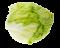 uhorky a šaláty